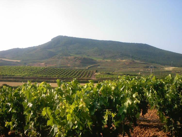 Candidatura española del 'Paisaje del vino y el viñedo de Rioja' a Patrimonio de la Humanidad 1