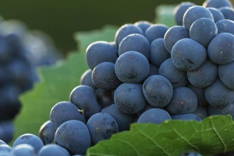 Las exportaciones de productos vitivinícolas aumentaron un 6,4% en los 9 primeros meses del 2013 2