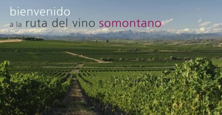 Conocer los vinos Somontano con catas y talleres