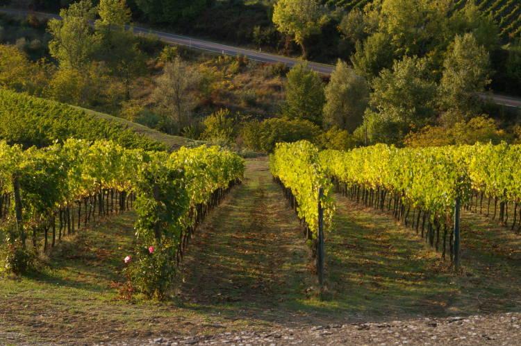 Toscana: un paraíso para los amantes del vino 3