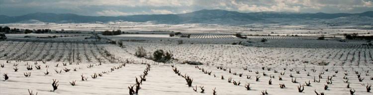 Estados Unidos se interesa por los vinos de Cariñena 1