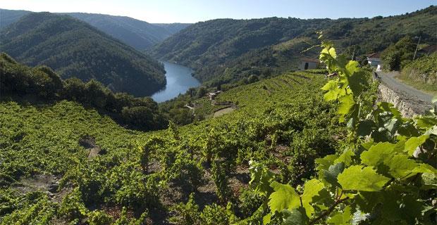 Galicia nominada a Mejor Zona Vinícola del Mundo en 2017 por Wine Enthusiast