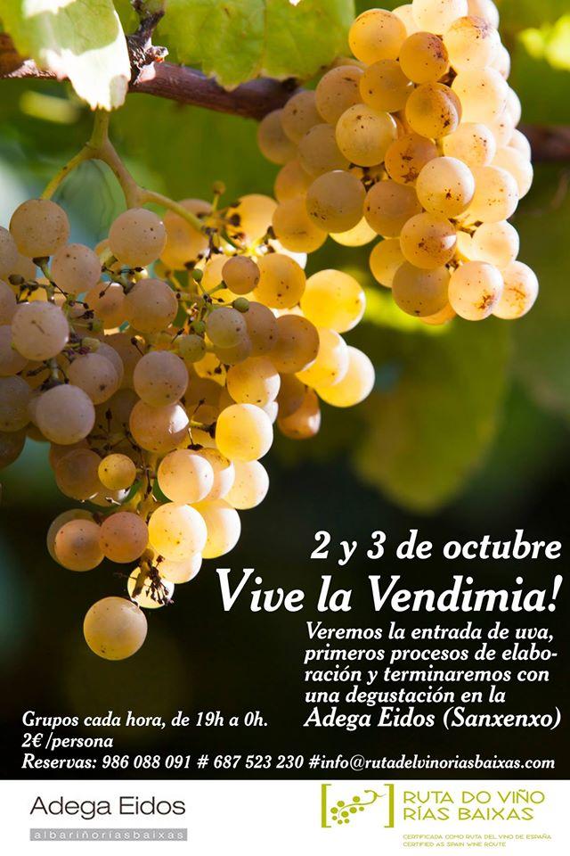 Oferta enoturística de Adega Eidos en la Ruta do Viño Rías Baixas en esta vendimia 1
