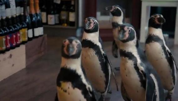 5 Pingüinos enfadados a la busca de vino para la Navidad: estupendo vídeo viral de la vinoteca Oddbins 1