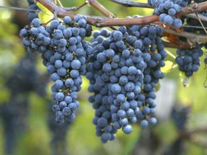 Elegidos los mejores vinos de España elaborados con Monastrell 1