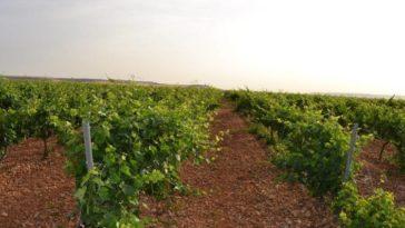 MATARROMERA utiliza sensores inalámbricos remotos para mejorar la producción y rentabilidad de sus viñedos 1