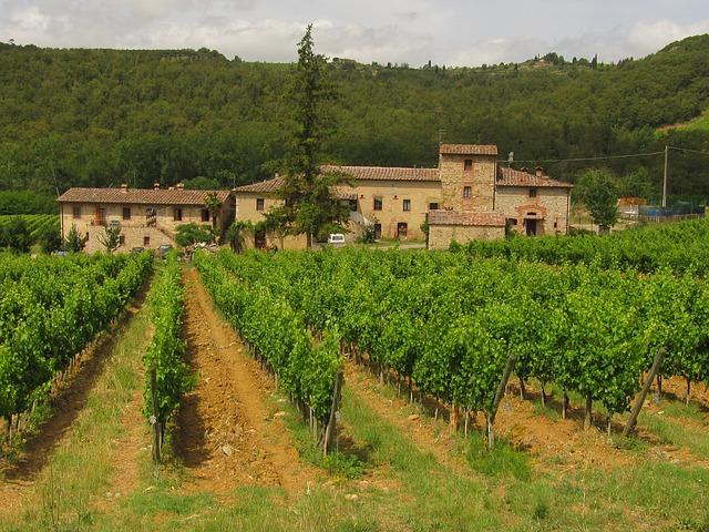 Italia el país con mayor diversidad en su viñedo