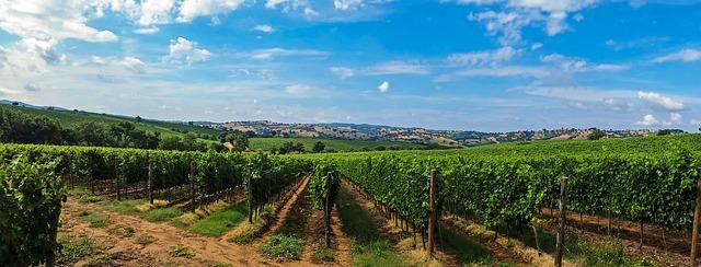 Toscana: un paraíso para los amantes del vino 4