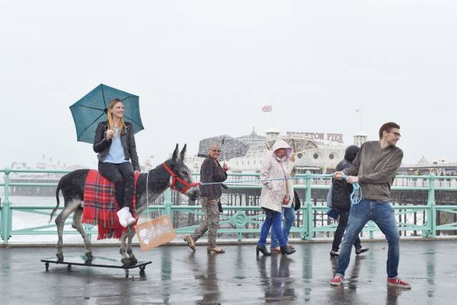 Utilizan a un burro disecado como medio de transporte para llevar a los clientes a una cervecería 1