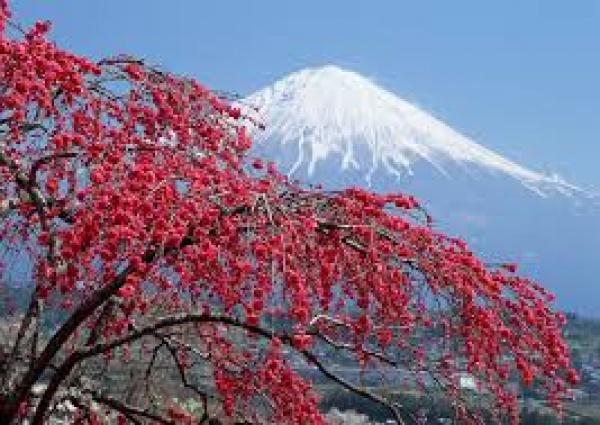 Cifras del mercado del vino espumoso en Japón 1