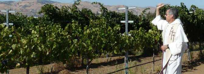 La Diócesis de California vende vinos 'premium' elaborados con uvas de cementerios 1