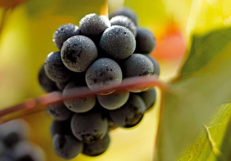 Hablando de vinos y uvas: 'La Monastrell' (3) 2