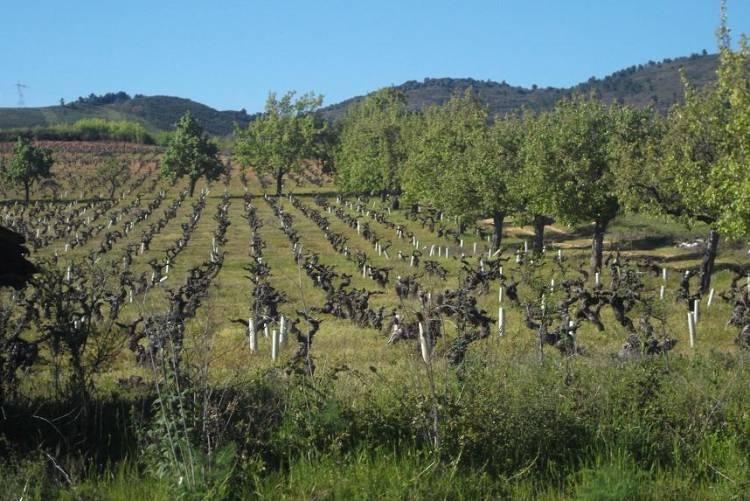 Enoturismo: no es solo vino lo que reluce 1