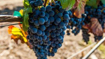 Hablando de vinos y uvas: 'La Malbec' (16) 1