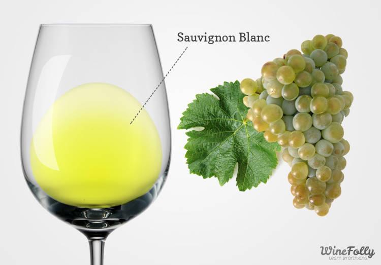 Primer Congreso Internacional de la Sauvignon Blanc en Nueva Zelanda a primeros de febrero 1