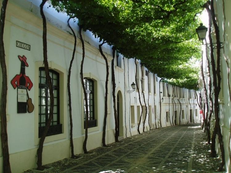 La Calle Ciegos de Bodegas TIO PEPE premiada como uno de los túneles de árboles más bonitos del Planeta 1