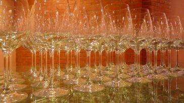 El día que muchos vinos dejaron de enamorarme (vinos clones) 1