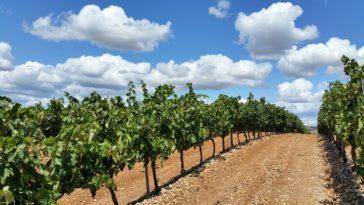 Los principales destinos enoturísticos de La Rioja 1