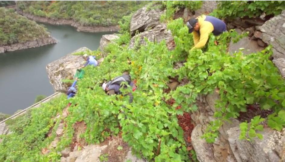 ¿Sabéis lo que es la viticultura heróica? 1