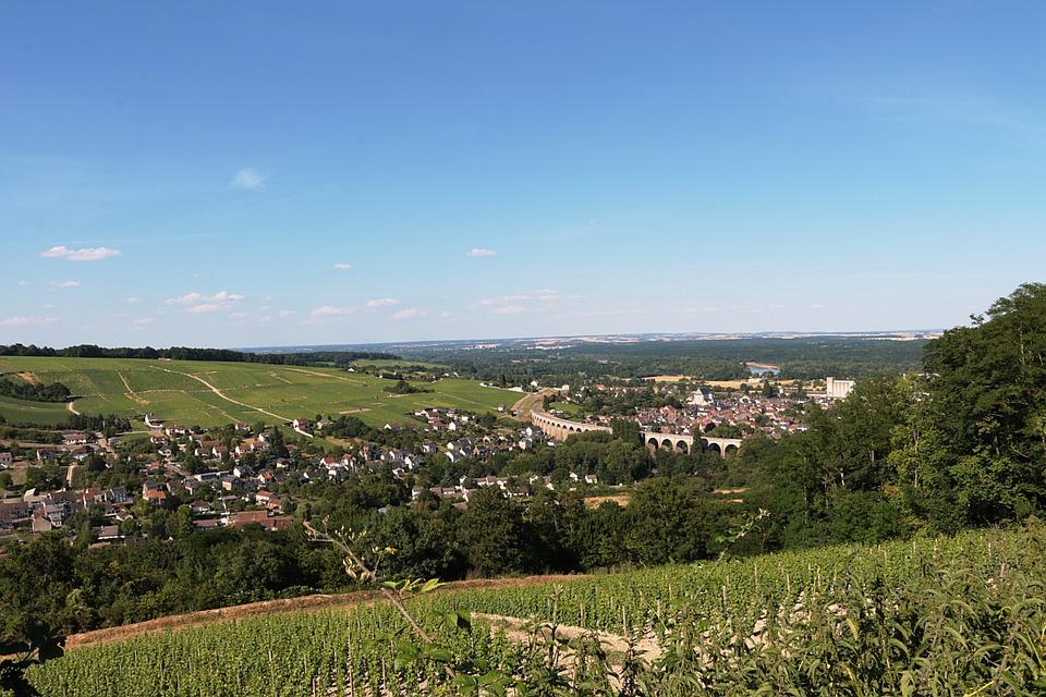 La comarca del Loira sufre pérdidas del 30% de la vendimia por las heladas 1
