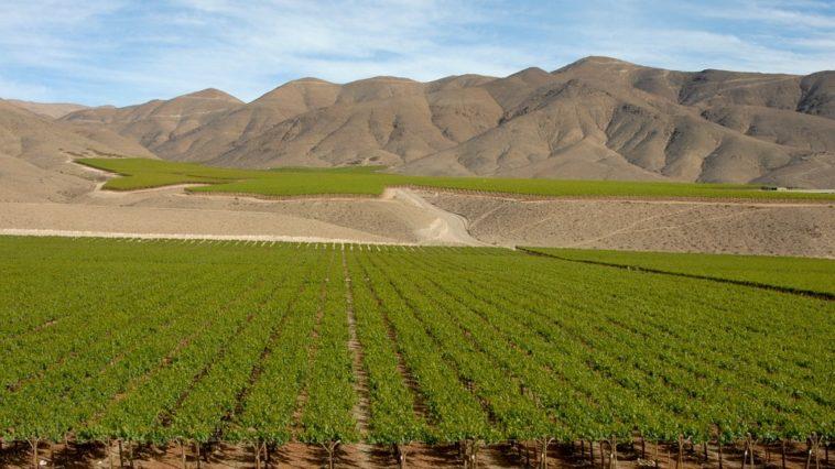 Chile sube el volumen de las exportaciones de vino en lo que va de año pero no el valor 1