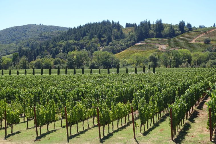 Organic Wines Keep it on the Lowdown 1