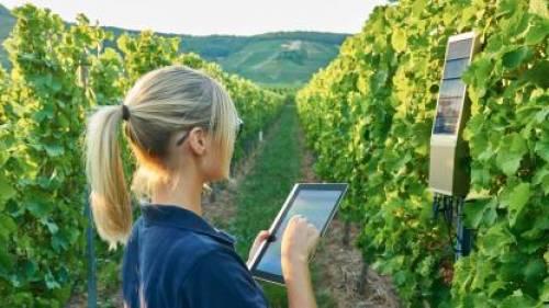 TracoVino la aplicación de Internet al control completo del viñedo 1