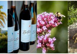 Bonterra es elegida 'Viña Americana del Año' en los Estados Unidos 1