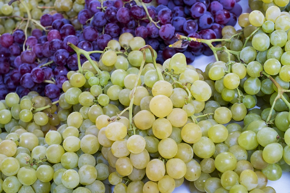 Cifras de cierre de vendimia en Rioja, Ribera del Duero, Jerez, Cava y Valdepeñas 1