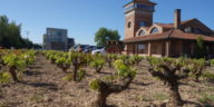 Visita de enoturismo a Viña Ijalba, vinos ecológicos en La Rioja 1