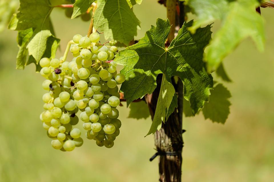 ¿Se puede decir que un vino orgánico es vegano? 1