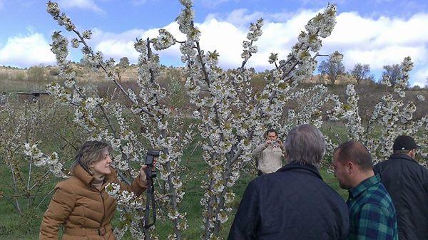 Comienza la floración de los cerezos en el Valle de Caderechas 1