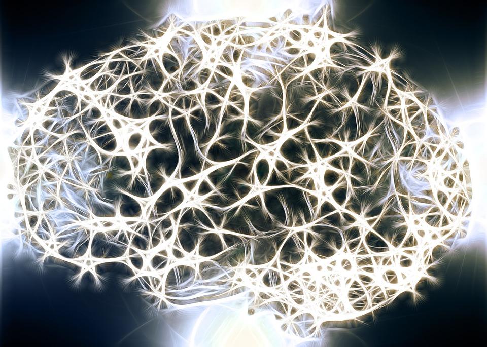 El resveratrol del vino tinto puede ralentizar el envejecimiento cerebral 1