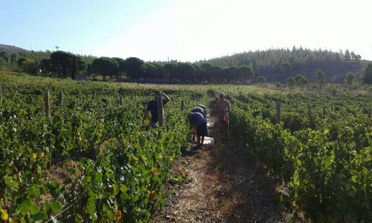 Agrupación de Defensa Vegetal (ADV) de la DO Empordà para promover una viticultura más sostenible 1