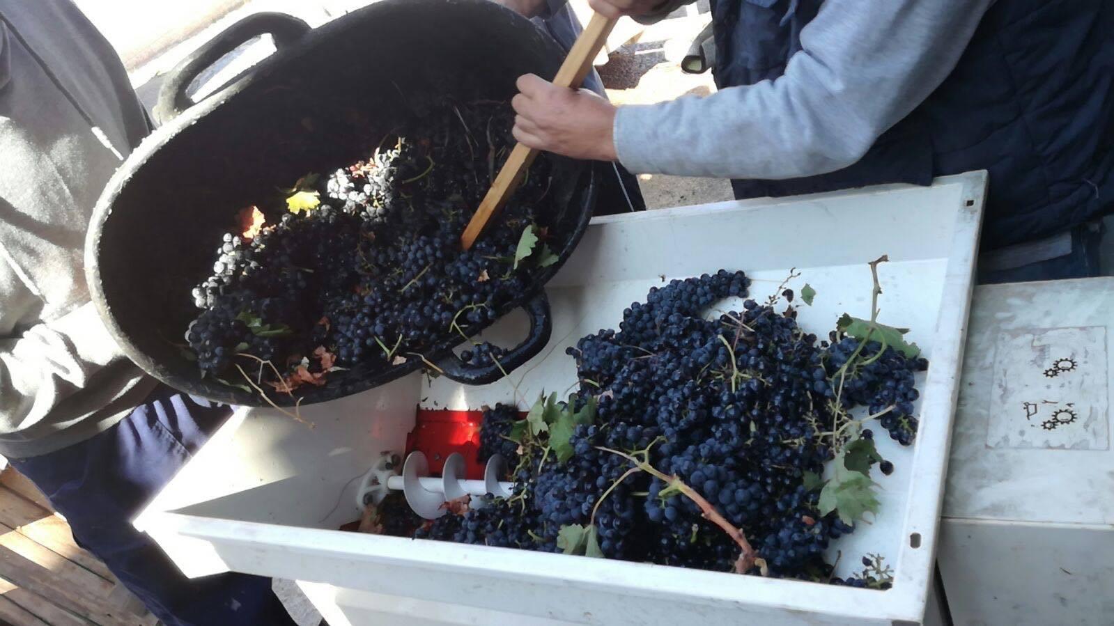 Asistimos a la elaboración de vino tinto en Rueda 4