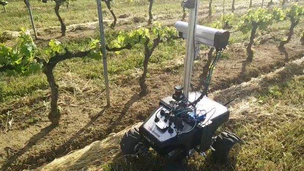 Experimentan en un viñedo portugués con un nuevo robot que aumenta la productividad de los viticultores 1