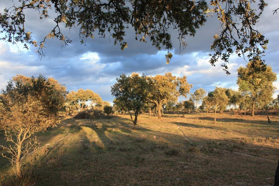 La recogida de uva se reduce en un 42% en Extremadura 1