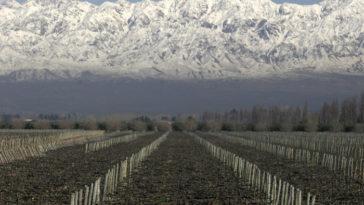 Una bodega argentina nominada a la Mejor Bodega del Año del Nuevo Mundo por Wine Enthusiast 1