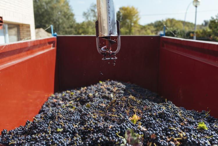 La Rioja cierra su vendimia más temprana con reducción de volumen pero de gran calidad 1