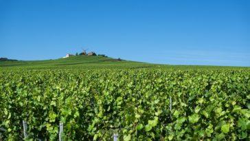 5 de las rutas del vino más populares de Francia 1
