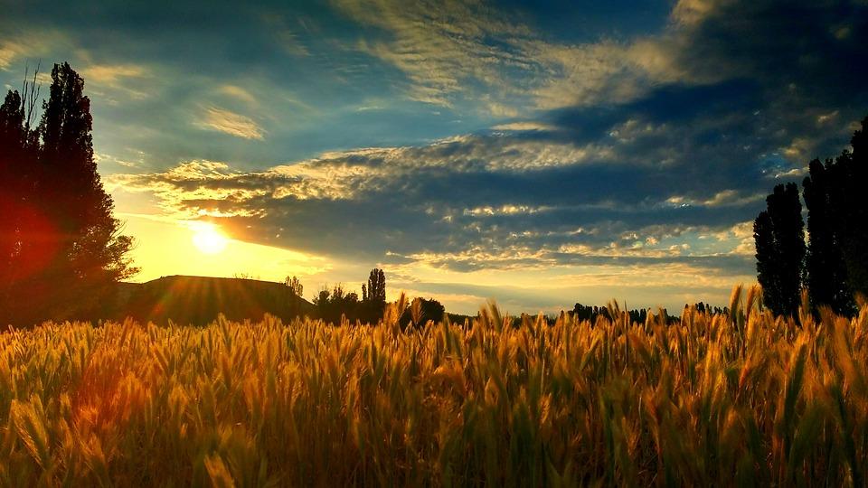 Descarga las actividades de la Ruta del Vino Ribera del Duero para esta semana del Día Europeo del Enoturismo 1