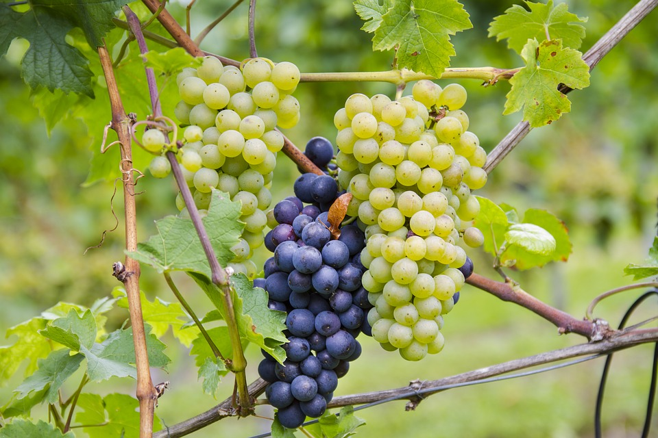 ¿Pagarías más por un vino con certificación ecológica? 2