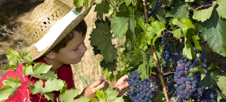 La Ruta del Vino Ribera del Duero crece y diversifica su oferta 1