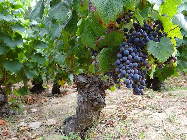 Andes Wines incluye a España en estrategias para impulsar proyectos entorno al Cambio Climático en la Agricultura 1